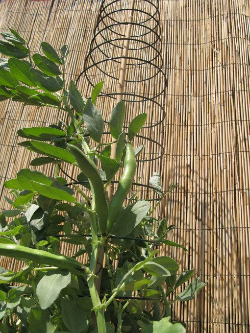 Spiral Plant Support Twin Pack
